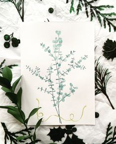 Watercolor #eucalyptus illustration by Beliz Oral