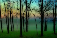 enchanted woods photos | enchanted woods | Natural Landscapes