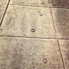 Love to find paw prints on the concrete! :)