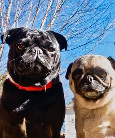 Edgar and Charlotte enjoying a warm weekend.