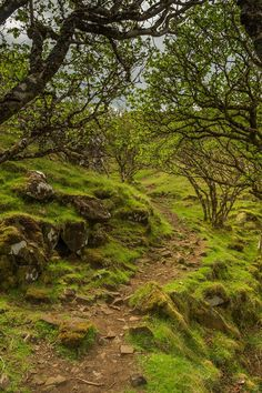 Fairy Glen Path, Isle of SKye