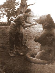 WOJTEK North Africa, Brown Bear, World War Ii, Wwii, Elephant, Military, Polish, Patriots, Activities