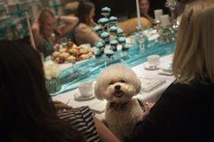 Zoe, the Bijon Frise of Harriette Rose Katz, at the bridal shower of Lucky Diamond, a Maltese dog, in New York, May 14, 2012.   REUTERS/Allison Joyce