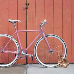 """Bike with """"Easter Bunny"""""""
