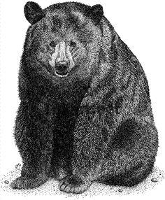 American Black Bear (Ursus americanus) Line Art and Full Color Illustration Art And Illustration, American Black Bear, Bear Coloring Pages, Bear Drawing, Ink Pen Drawings, Graffiti, Bear Art, Stock Art, Animal Cards