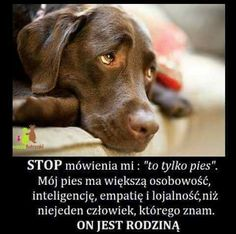 Dog Quotes, Life Quotes, All About Animals, Save Life, My Animal, Happy Quotes, I Love Dogs, Proverbs, True Stories