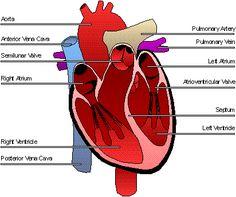 Pharmacist Ben's Blog: Heart Disease Simplified