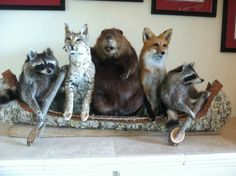 Taxidermy at its best