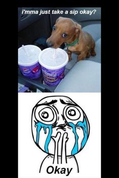 The best dachshund memes ever. Cute Animal Memes, Cute Funny Animals, Funny Cute, Hilarious, Funny Dog Memes, Cat Memes, Funny Dogs, Cute Puppies, Cute Dogs