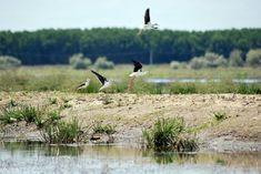 20232357_1449227091832520_6867577333402910705_o Danube Delta, Boat Tours, Bird Watching, Landscape, Animals, Scenery, Animales, Animaux, Animal