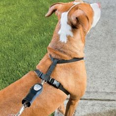 Ultrasonic Anti-Pull Dog Trainer