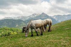 Keep grazing Horses, Mountains, Green, Nature, Travel, Animals, Naturaleza, Viajes, Animales