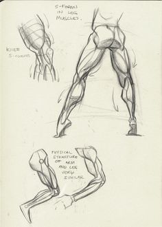 http://tulptorials.blogspot.nl/2014/04/anatomy.html ★ || CHARACTER DESIGN REFERENCES