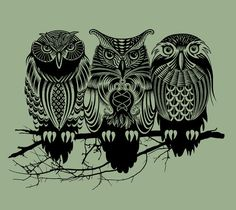Owls images Owls image owls 36275217 wallpaper and background photos