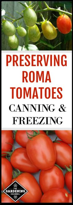 Grow and preserve your own roma tomates Roma tomatoes are also known as Italian or plum tomatoes With their prolific yields of meaty sweet fruit they make the ideal tomat. Freezing Tomatoes, Preserving Tomatoes, Canning Diced Tomatoes, Growing Tomatoes, Tomato Canning, Canning Peppers, Freezing Vegetables, Veggies, Plum Tomatoes
