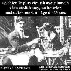 En savoir plus (en anglais) : https://en.wikipedia.org/wiki/List_of_oldest_dogs #bluey #chien Le chien le plus vieux à avoir jamais vécu était Bluey un bouvier australien mort à lâge de 29 ans.