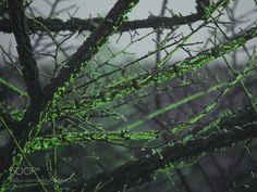 Acid Branches by Ethical