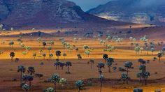 Savanna, Madagascar