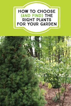 How to choose (and find) the right plants for your garden #garden #gardening #bestplants #findingplants #shrubs #trees