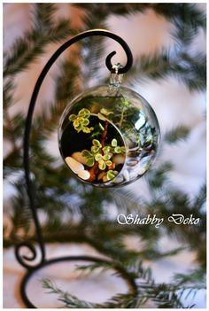 Glass Ball, Terrarium, Christmas Bulbs, Holiday Decor, Terrariums, Christmas Light Bulbs
