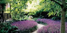 Backyard Garden With Blossoming Purple Liriope Ground Cover : Liriope Low Maintenance Plants For Ground Cover Perennial Grasses, Ornamental Grasses, Perennials, Ground Cover Flowers, Ground Cover Plants, Monkey Grass, Liriope Muscari, Amazing Grass, Border Plants