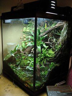 Sloped substrate looks more natural Aquarium Terrarium Frog Habitat, Gecko Habitat, Reptile Habitat, Reptile House, Reptile Room, Gecko Vivarium, Gecko Terrarium, Terrarium Reptile, Aquarium Terrarium