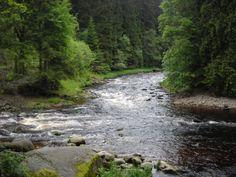 Soutok Vydry a Křemelné - Šumava - Česko Otters, Czech Republic, Prague, River, Nature, Outdoor, Outdoors, Naturaleza, Otter