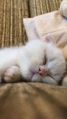 #cat #lovecats