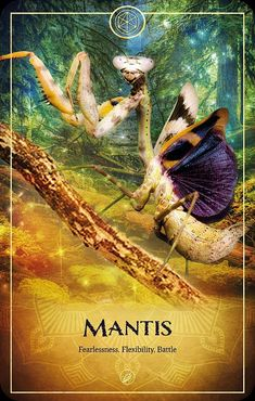 Spiritual Guidance, Spiritual Wisdom, Law Of Attraction Love, Intuitive Empath, Angel Guide, Animal Symbolism, Oracle Tarot, Online Image Editor, Angel Cards