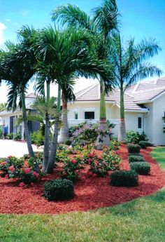 Royal Palms (3 in photo) with Christmas Palm (triple stem in forefront). Universal Landscape, Inc. www.universaldevgroup.com