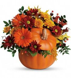telefloras country pumpkin