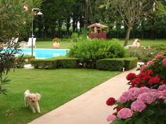 Biutiful garden and pretty little dog