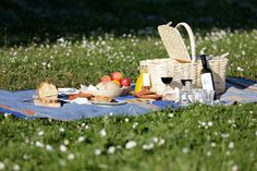 Relax and have a picnic under the shade of one of the many oak trees existent at the estate São Lourenço do Barrocal, Monsaraz, Alentejo, Portugal www.barrocal.pt
