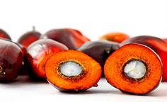 Óleo de palma, também chamado de azeite-de-dendê, tem diversas aplicações