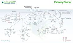 Dr. Ben Lynch's Pathway Planner.  Just awesome!!!