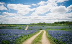 The best time to see the Bluebonnet Trail of Texas, located between Austin and Houston, is from March to May, when the wild bluebonnets are out in full force, creating a sea of blue-purple floral wonder.