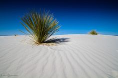 """""""Silence"""" ... just sitting there and relax. White Sand Ntl.Monument, NEW MEXICO"""