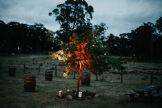 Don't forget the outside lights! Uplit trees are stunning as night falls. Wedding Film, Wedding Events, Marquee Wedding, Amazing Weddings, Sunshine Coast, Byron Bay, Gold Coast, Don't Forget, Tent