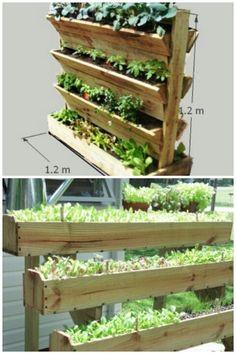 Vertical salad garden