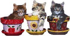 gatitos 2 - Imagenes con brillo Forajidos
