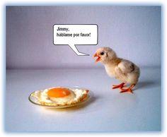 5 imagenes amorosas de pollitos - Taringa!