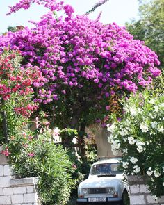 Typical Croatia houses surrounded by flowers in Dubrovnik. Whitewater Rafting, Holiday Activities, Dubrovnik, Kayaking, Adventure Travel, Sailing, Houses, Plants, Croatia