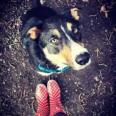 Discover our handmade supernatural funky wellies that are sustainable, Vegan friendly and unique. Over 40 designs with recycled packaging + Free UK Delivery! Our wellingtons are super soft, Tall or Short, sustainable and funky. Funky Wellies, Dog Walking, Vegan Friendly, Supernatural, Corgi, Recycling, Handmade, Animals, Style