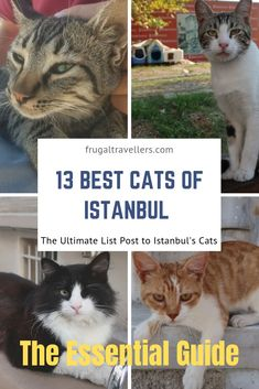 Welcome to the Ultimate Guide to the 13 best cats of Istanbul. This is the Essential list post on where to find the Top Cats in Istanbul. Cat lovers only. Travel Advise, Travel Tips, Budget Holidays, Living On The Road, Working Holidays, Wanderlust Travel, Cool Cats, Budget Travel, Travel Guides