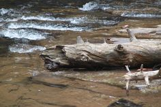 Cascade Falls, Virginia, Omgevallen Boom, Natuur