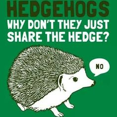 Hedgehogs Why Don't They Just Share the Hedge?