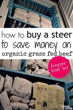 How to buy a steer to save money on organic grass fed beef!  Your questions answered!  Learn about the process and the cost. save money on food frugal meal ideas, meal planning tips and budget recipes!
