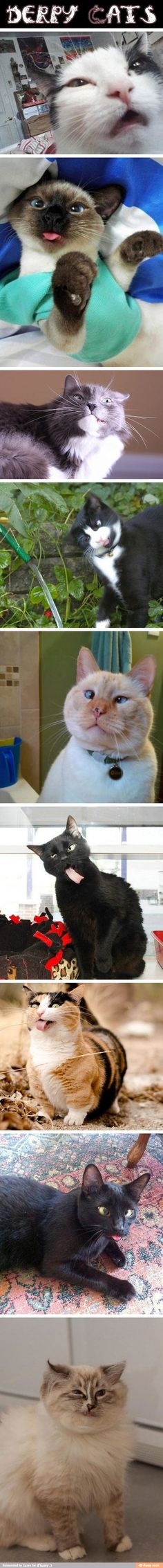 Cats.. Oh my