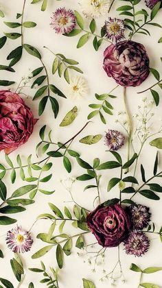 Wallpaper flores