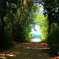 【season_kimi】さんのInstagramをピンしています。 《木漏れ日のわくわく小道 - #komorebi #sea #tree #road #greatbarrierreef #greenisland #australia #木漏れ日 #小道 #グレートバリアリーフ #オーストラリア #海 #海へ続く道 #グリーン島 #ビーチ #写真好きな人と繋がりたい》